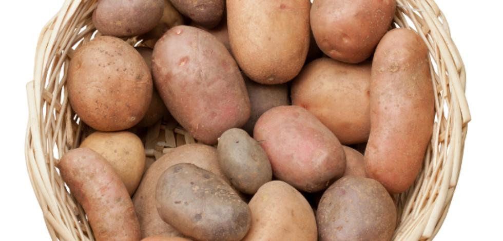 Red potatoes in a wicker basket