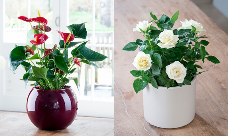 15% off all Christmas plants \