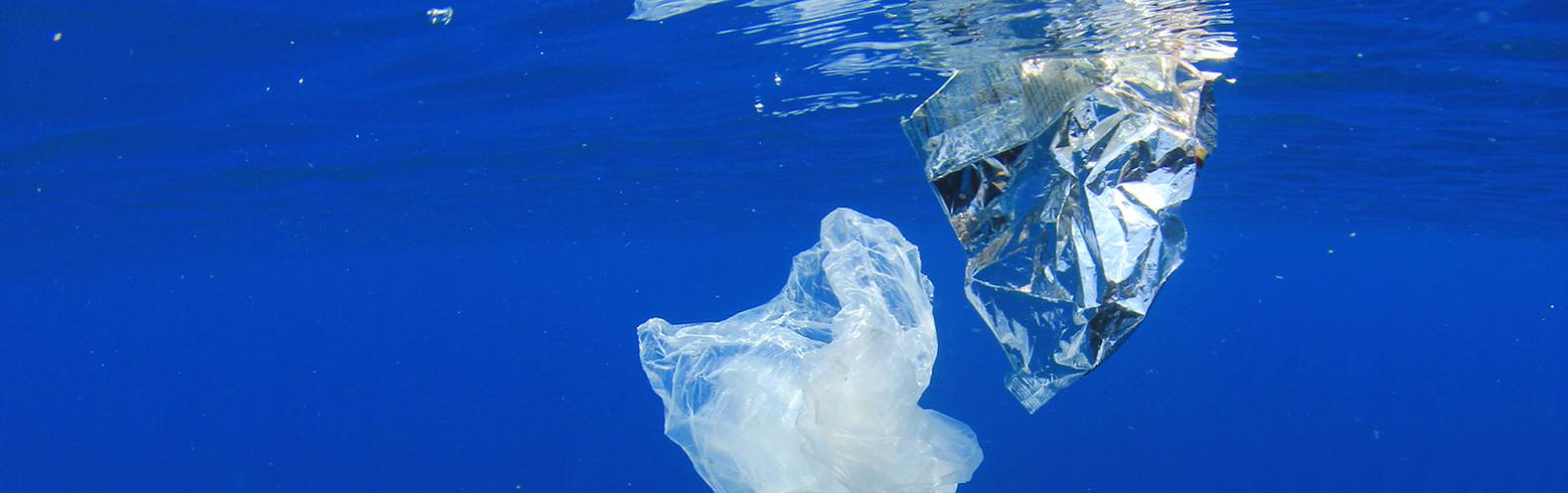 Cool products made from ocean waste