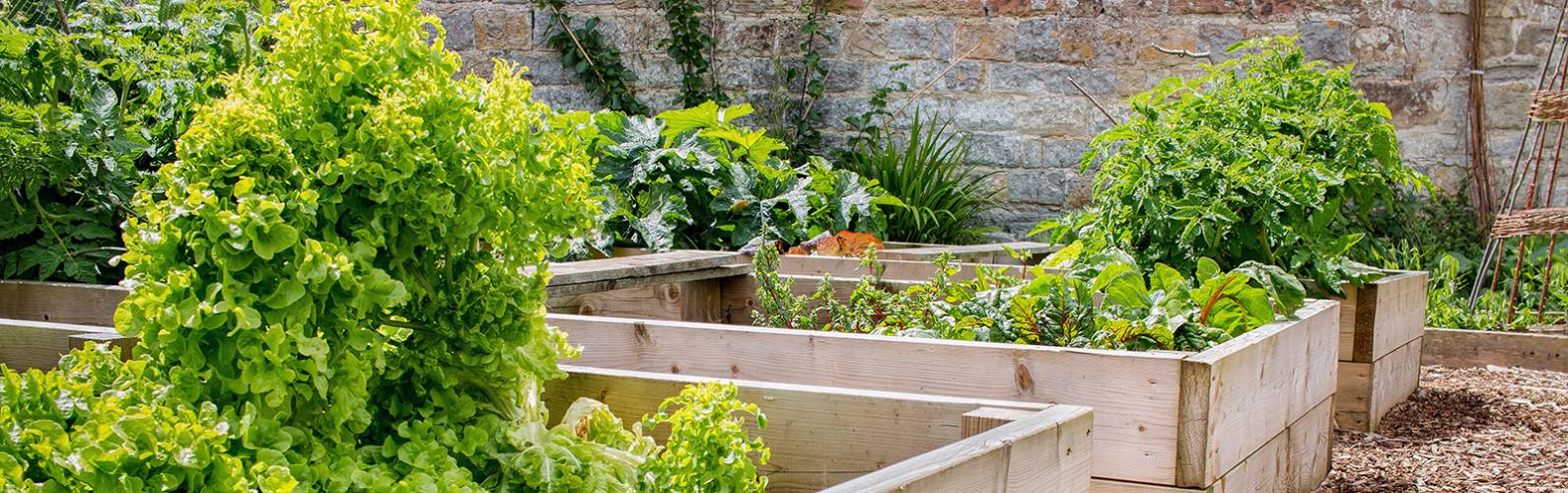 Cheap Diy Raised Beds For Growing Your Own