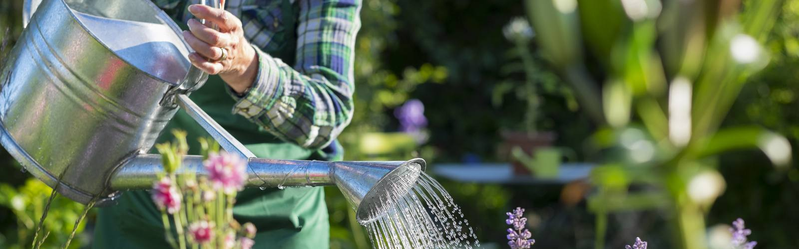 How to keep house and garden plants happy when you go away
