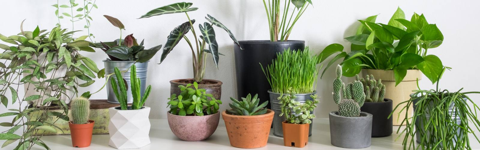 Five reasons to get more houseplants (besides cleaner air!)