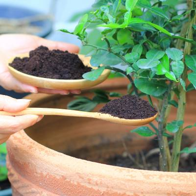 Wish your plants a 'Happy Earth Day' with a food scrap feed