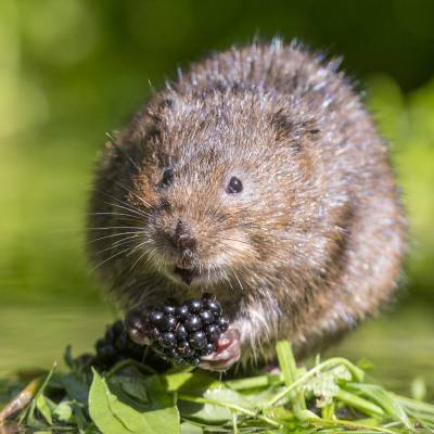 Winter wetland wildlife encounters