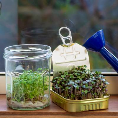 How to grow-your-own in just six inches of space