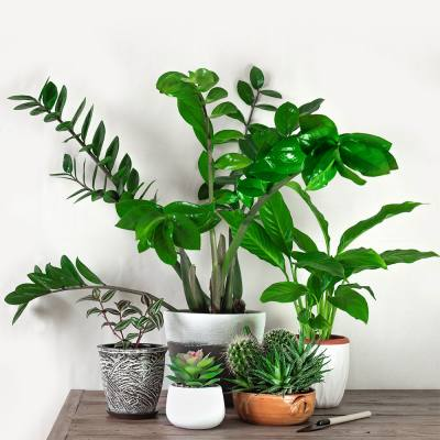 The ultimate guide for new houseplant parents
