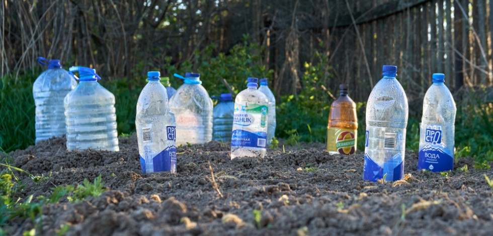 Plastic bottles used as drip irrigators in dug over flower bed