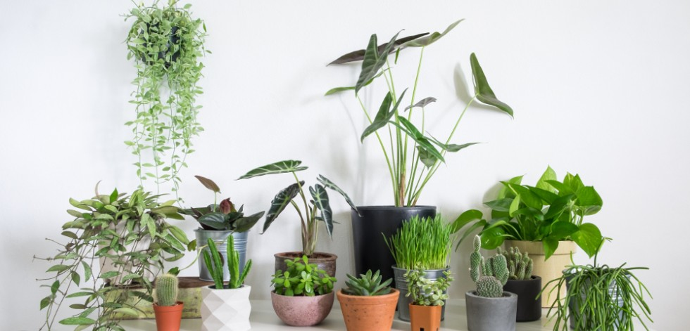An assortment of houseplants of different shapes and sizes