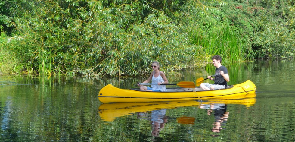 A woman and a man paddling a yellow open canoe past a river bank of weeping willow