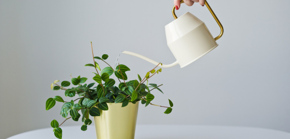 Woman's hand holding a watering can over a houseplant