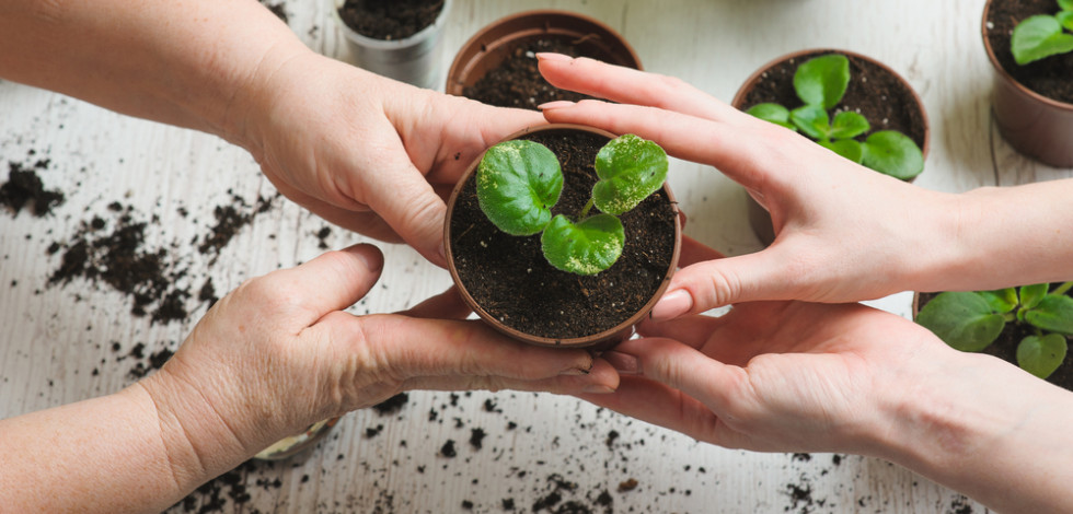 Elderly woman's hands giving a plant into a younger woman's hands