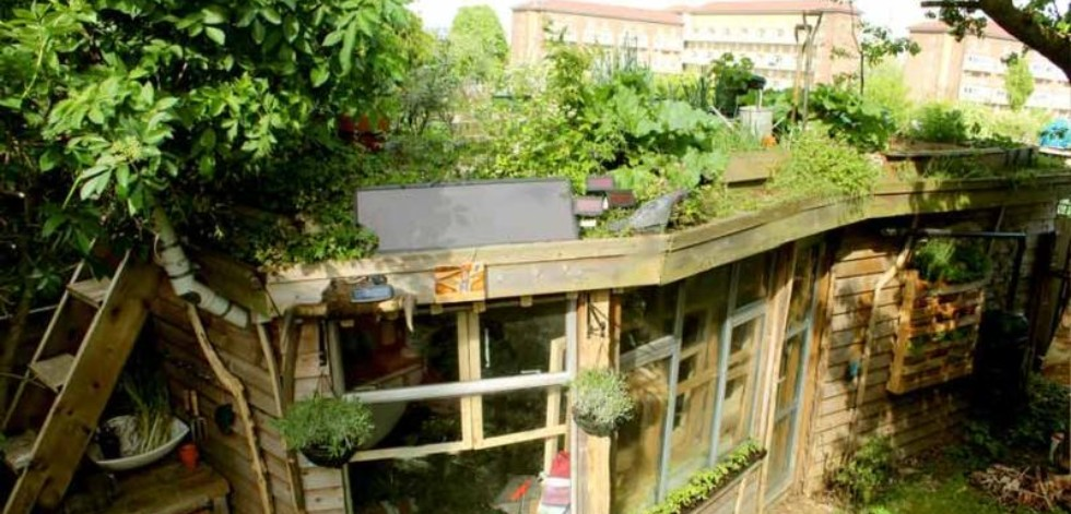 Shed with fruit and vegetable plants on the roof