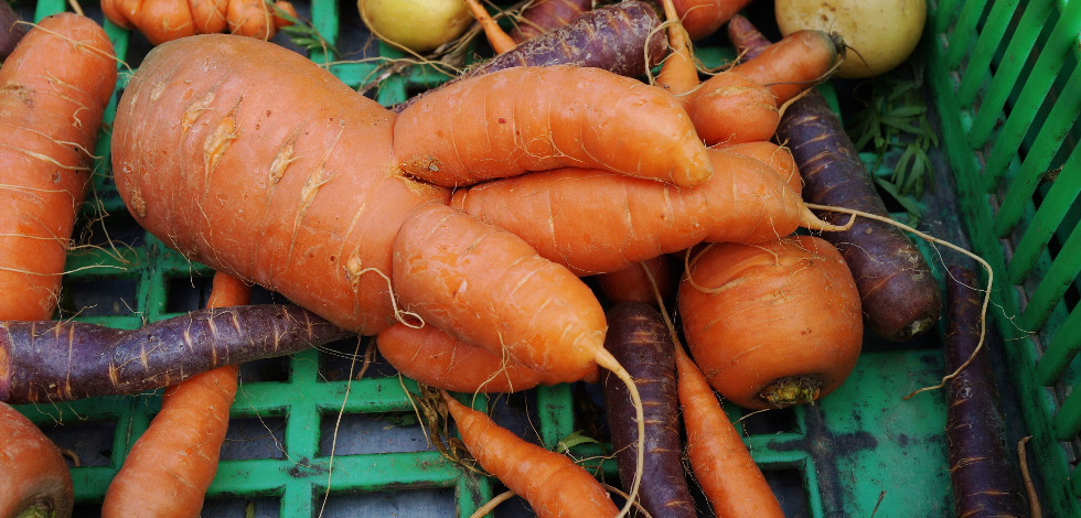 Strange looking carrots