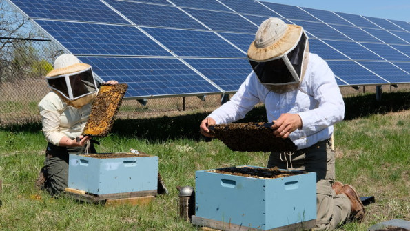 Beekeepers on a solar farm