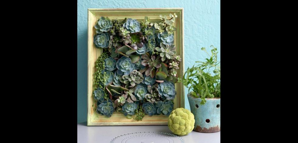 Framed vertical mini-garden of succulents